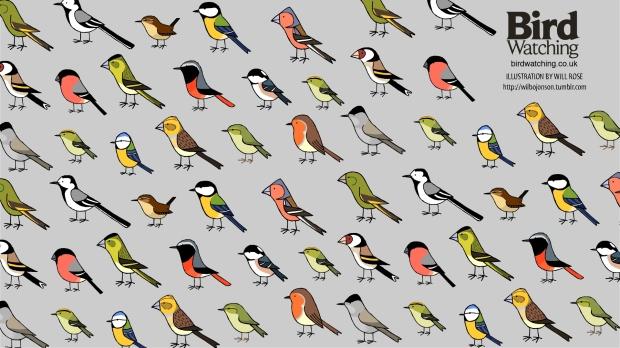 Bird Watching Wallpaper-Garden Birds